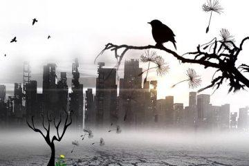 Desolation-Public-Domain