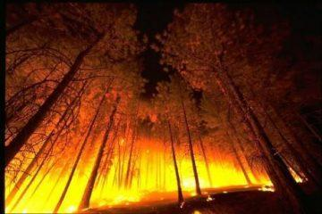 Wildfire-In-A-Forest-Public-Domain-460x306